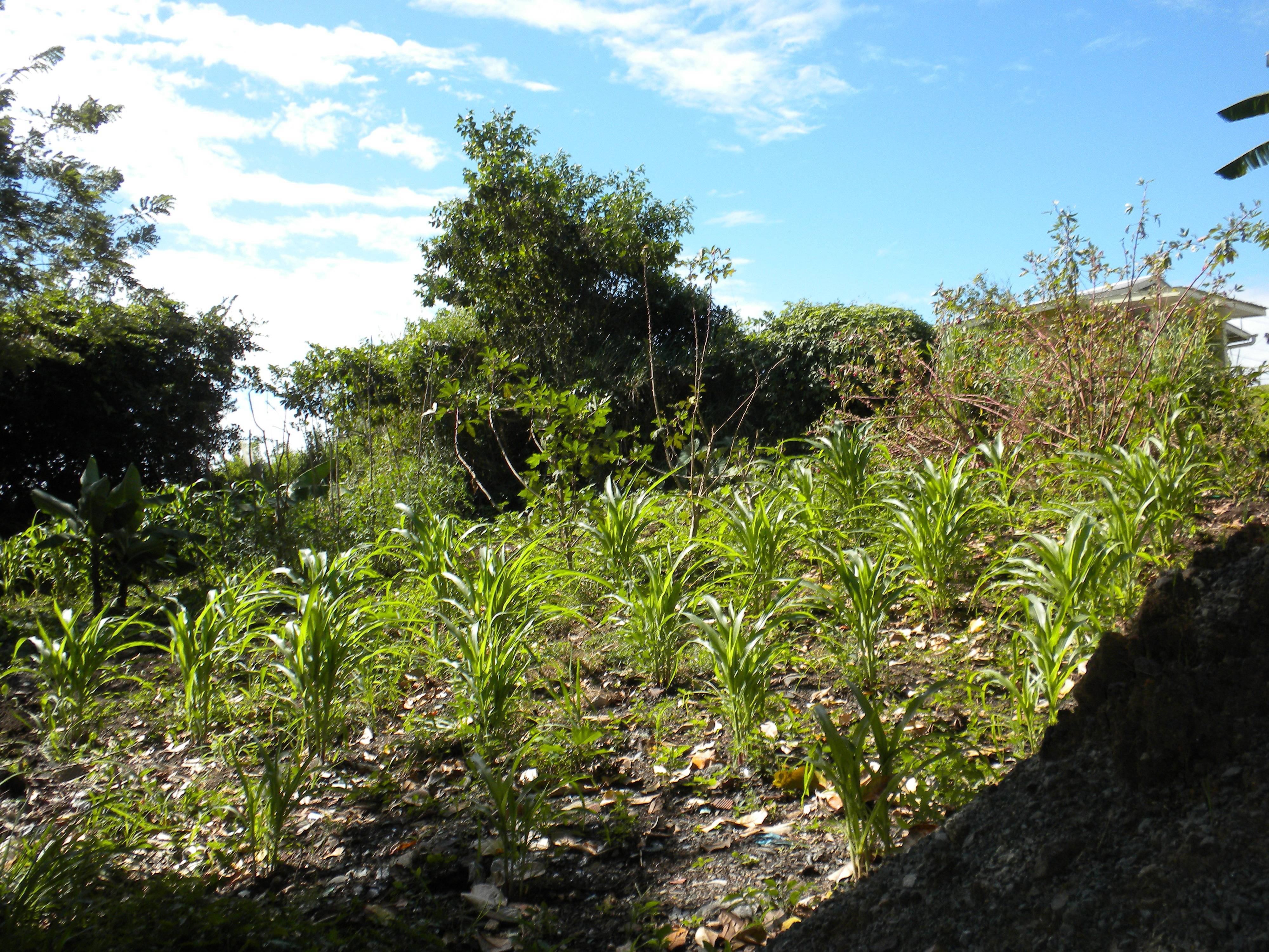 Land for Sale in Trinidadand Tobago http://www.mondinion.com/Real