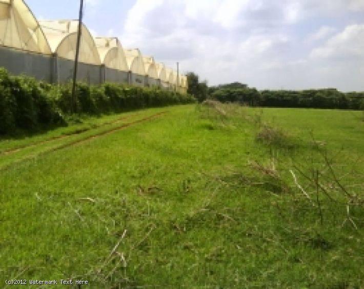 Limuru Flower Farm Red Hill Ref Lim01 Md1904339
